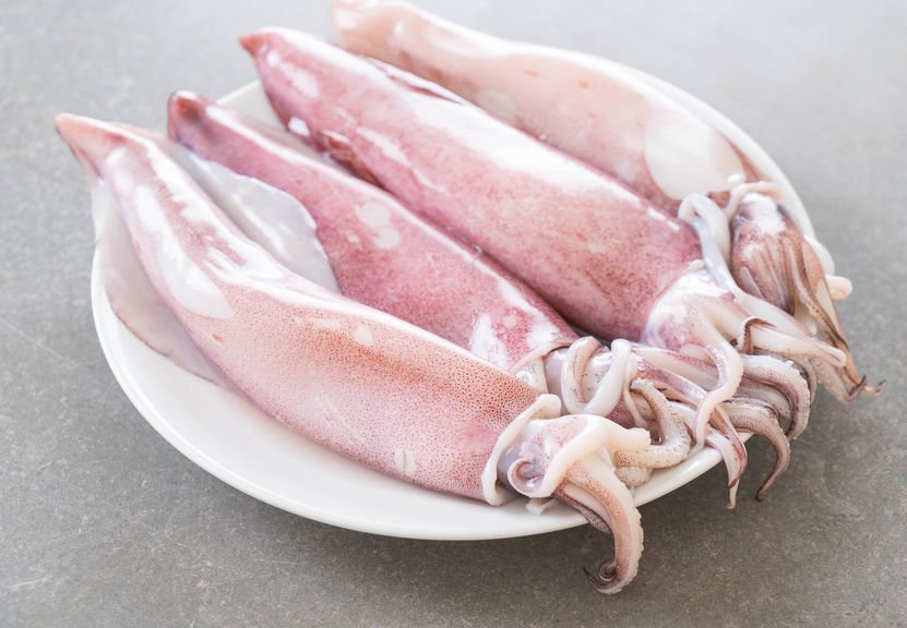 Fresh Squid on a plate waiting to be come a simple Calamari Salad
