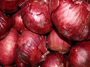Onion Family 1