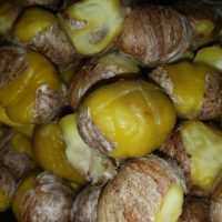 Chestnuts prepared for Chestnut Soup