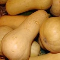 Fresh butternut squash for use in Mashed Butternut Squash