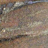 Pastrami Smoked Salmon on Cedar Plank