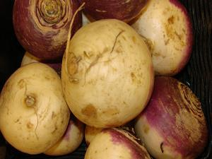 purple turnip